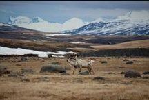 Iceland // Island / my travel...