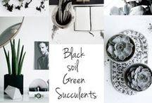 INTERIOR | GREENS | PLANTS