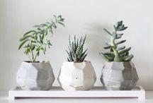 p l a n т s ✿ / Plants are f̲r̲i̲e̲n̲d̲s̲ #plants