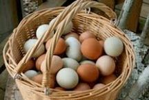 Chickens-- Chicken Coops and Eggs / by Barbara Jean Ellis