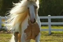 Horses <3 / by Sthefani.G