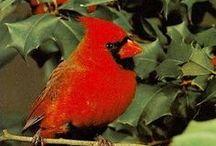 Cardinals / by Barbara Jean Ellis