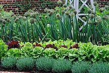 Vegetable Gardens / by Brenda McCaleb