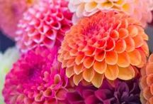 Eye Catching Flowers / Beautiful flowers and plants
