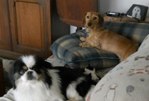 The Furbabies  / These are my four legged furbabies / by Barbara Burns