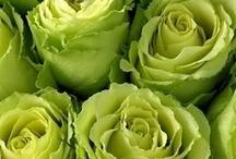 Hues ~ Green ❤