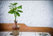 diy / plants