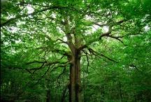 Trees...beautiful trees