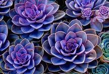 floral love / by Rachel Kilpatrick