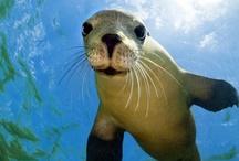 Animal Planet / Animals from Around the World: Mammals, Marine Life, Birds, Wildlife, and More!