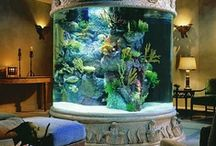 Saltwater Aquariums & Sea Life / Just one of my dreams, to have a sweet saltwater tank in my home / by Rachel Kilpatrick
