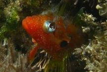 Caribbean Fish / Some of the more outstanding photographs taken underwater in the tropical waters of Latin America.