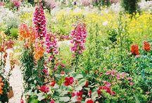 Garden / by Shelby Hensch