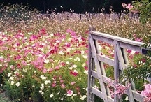 Country Girl Flowers / by Angela Erikson