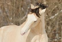 Horses & Ponies / by Angela Erikson