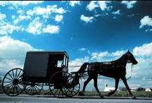 Amish Friends / by Angela Erikson