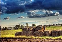Farm / by Angela Erikson