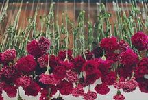 Carnation Creations / Great ideas for incorporating red carnations at home, in the office, for that special event, and at the chapter house!