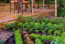 Hierbas y otras yerbas