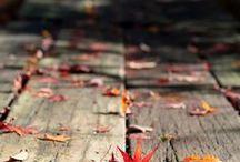Fall / by Andrea Morse