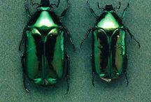 Green / Colour