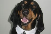 Mi Casa - Coonhounds / Coonhound models / by Marianne Griffith