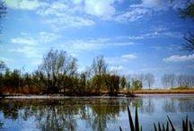 Nieuwe Dordtse Biesbosch / De veelkleurige pracht van het nieuwe recreatie- en natuurgebied in Dordrecht