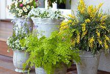 outdoor / garden ideas / by Rebecca Andritsch Hurla