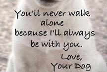 ♡ ANIMALS I adore ♡