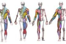 Anatomy / Help for artist who want to learn how to draw human body. Books, photos, references - resources with human body