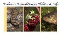 ♡ A: Amphibian,Reptile&Fish ♡ / Pets: Amphibians, Reptiles & Fish - Enclosure, Animal-Species, Habitat and Information