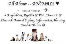 ♥♥♥ ANIMALS --> / + Amphibian, Reptiles & Fish. Domestic & Livestock. Animal Styling, Information, Housing, Food & Shelter ☺