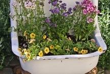 gardening / by Mary Carol Patrick