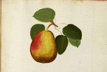 pears / by Perryn Pettus