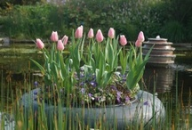 IMAGE  FLEURS / jardins ect>>>>>>>>>>> / by Jacqueline P