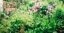 GARDEN / ideas for when I get my garden.