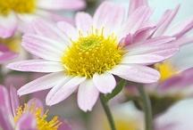 flowers / by Mary Carol Patrick