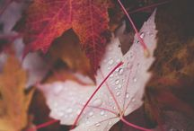 Fall! / by Laura Phipps