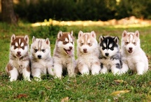 Puppies! / by Laura Phipps