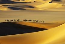 Morocco / by Minna Sainio-Calle