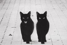 Gatos, sempre gatos / by Carla Fortino