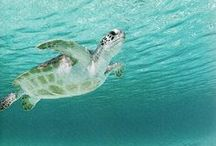 Sea Turtles / Philanthropy, save the earth, non-profits, donate, sea turtles, save the oceans, make a difference, buy fair trade, eco-friendly goods, organic clothing, environmentalism, conservation, donate