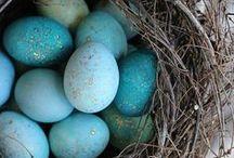 Spring and Easter Decorating / Easter brunch, spring party planning, spring and Easter decor ideas