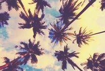 ☀S u m m e r • D a z e ☀ / by Taylor Bland