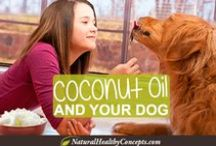 Happy & Healthy Pets! / Keep your pet health naturally! We love animals and we know you love yours...Check out these natural pet products, tips and photos! / by Natural Healthy Concepts