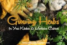 Gardening / by Natural Healthy Concepts