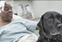 Heartwarming Pup Videos / by SomePuppyToLove