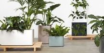 Deck Garden ideas