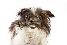 World's Ugliest Dog 2014 / by Kira Stackhouse