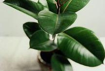 Indoor Plants + Gardening